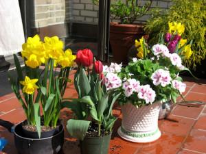 kvety na balkone
