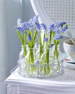 modre kvety