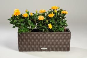 balconera50-lechuza-kvety