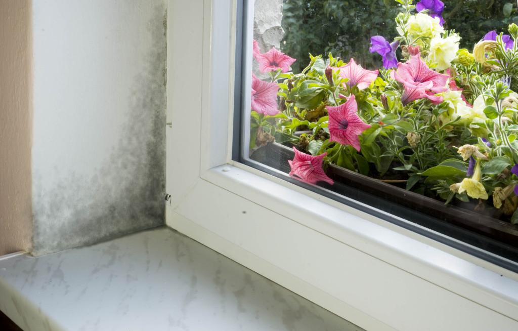 okno_plisen